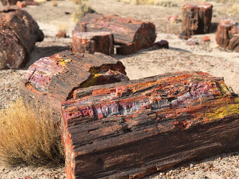 Rainbow Colored Petrified Wood