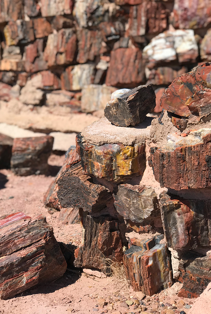 Rainbow Petrified Wood Used To Build Walls at Agate House