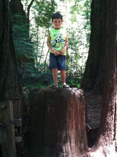 Carter Bourn at Henry Cowell Redwoods State Park in 2012