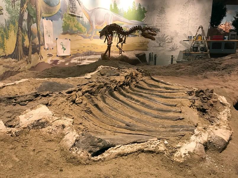 Dinosaur Bones and Fossils