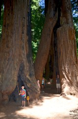 Henry Cowell Redwoods State Park in 2013