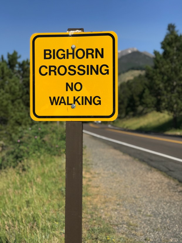 Bighorn Sheep Crossing Sign