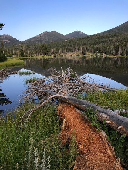 Fell Tree at Sprague Lake
