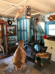 Taxidermy Cabin