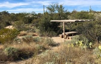 Javelina Picnic Area at Saguaro East