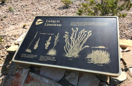 Cactus Identification Sign