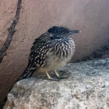 Living Desert Zoo Aviary
