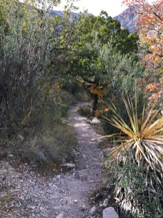 Trail in Guadalupe Mountains National Park