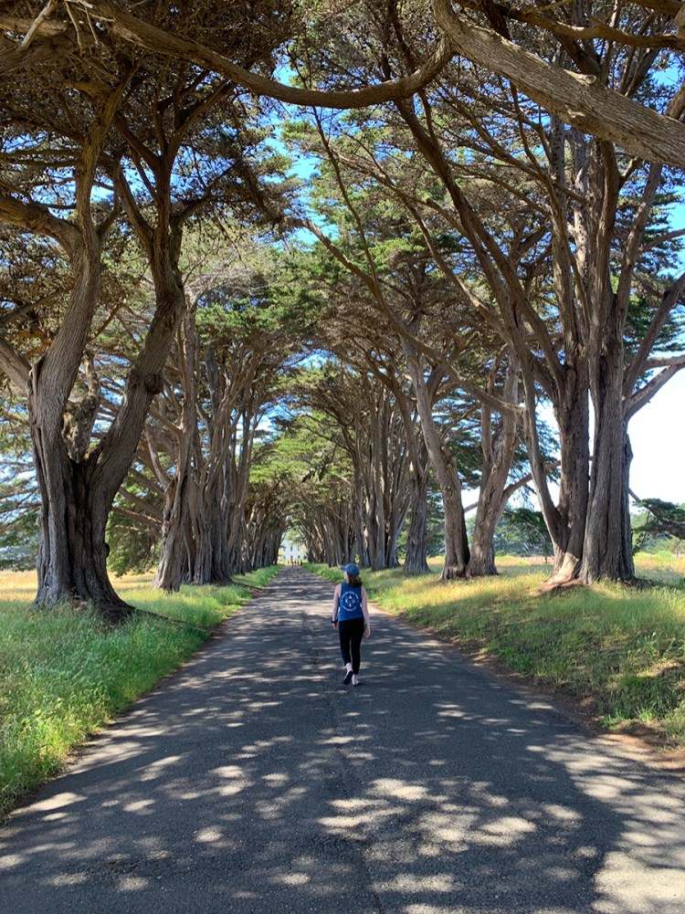 Natalie Bourn Walking Through the Point Reyes Cypress Tree Tunnel
