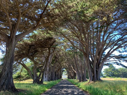 Point Reyes, California Cypress Tree Tunnel