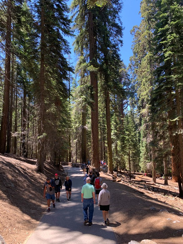 Walking the Crowded General Sherman Tree Trail