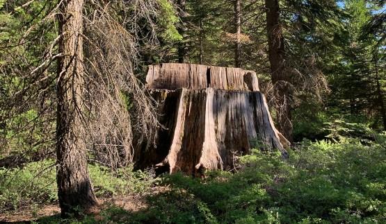 Big Tree Stump at Kings Canyon National Park