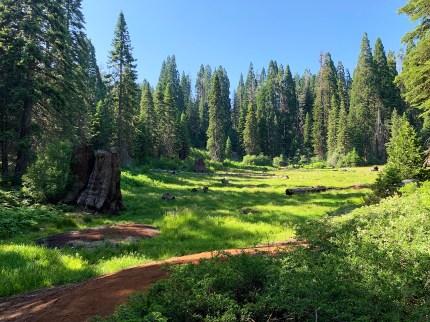 Meadow Big Stump Trail