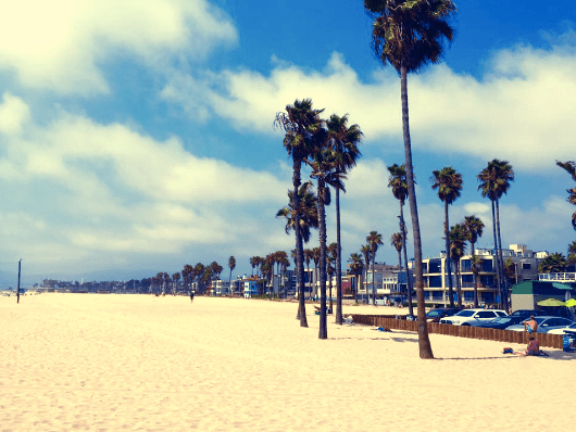 LA Los Angeles Venice Beach Palm Trees Beach