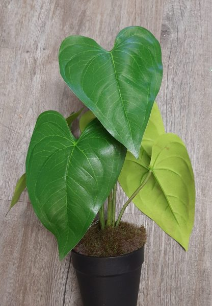 potted green leafed plant
