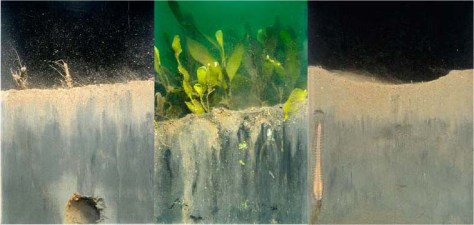 Three Sediment Profile Image (SPI) examples showing the benthic environment from the cameras point of view.