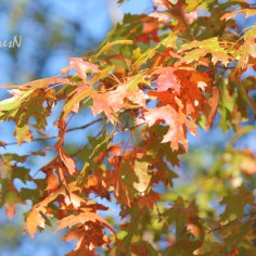 The colorful leaves of autumn