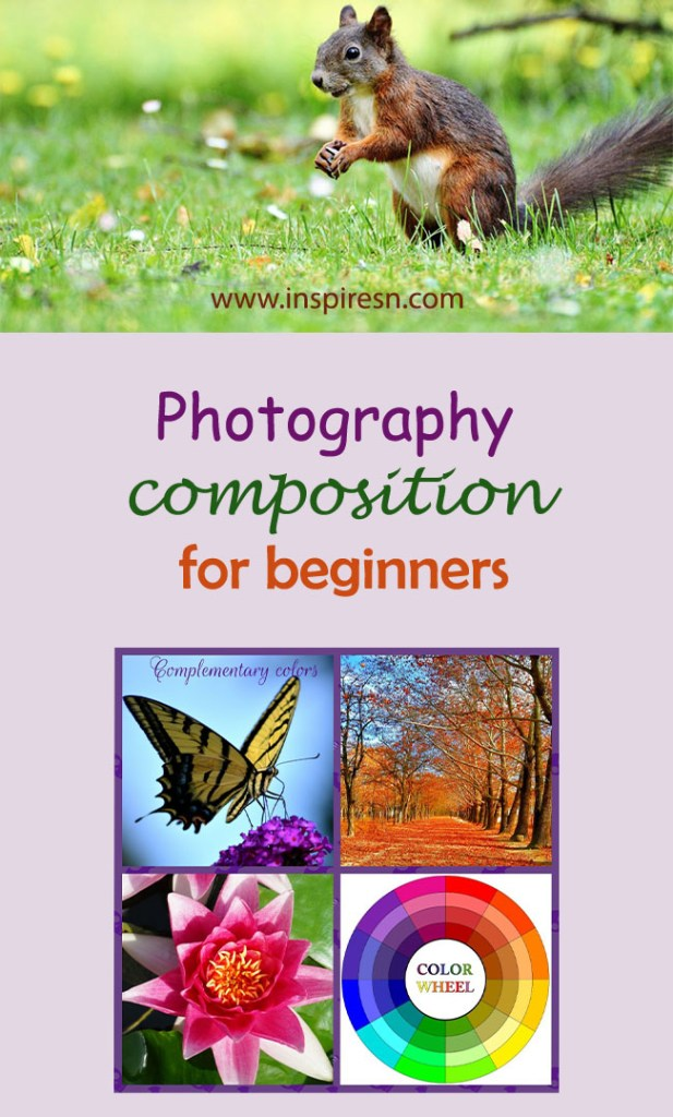 Photography composition for beginners