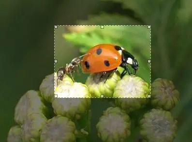 cara crop / memotong gambar di photoshop