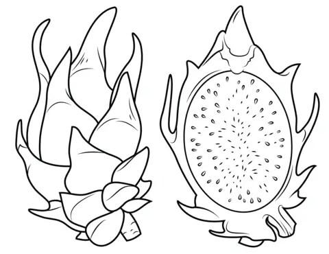 gambar mewarnai buah naga merah