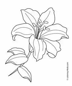 Gambar mewarnai bunga lily