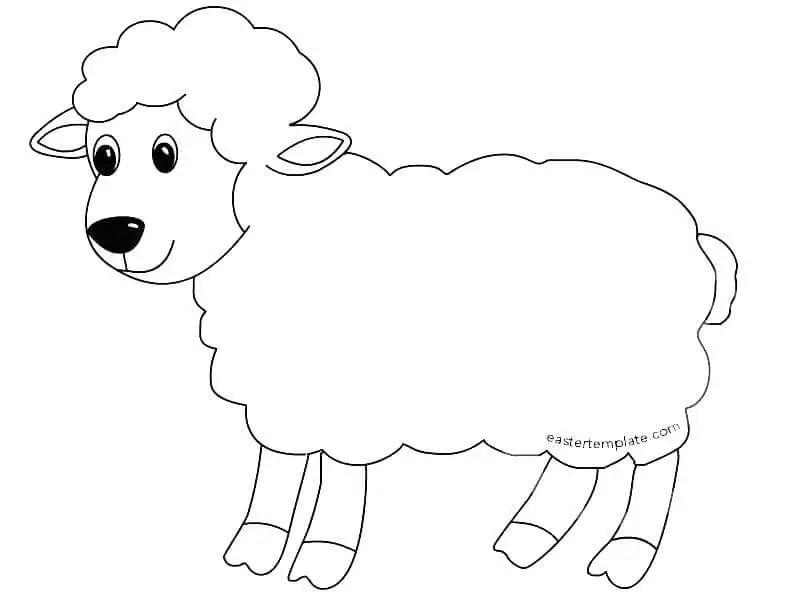 Mewarnai Gambar Binatang Domba Gambar Mewarnai