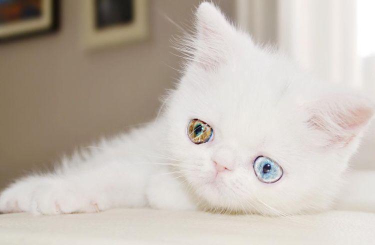 Pam Pam kucing