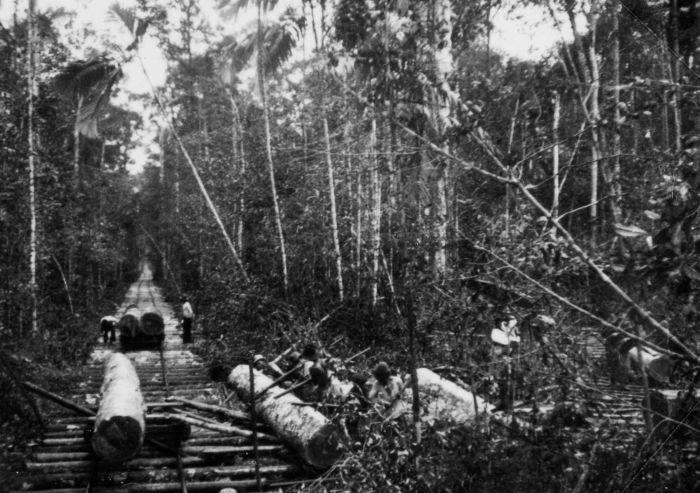 daerah penghasil kayu jati di Indonesia sejarah