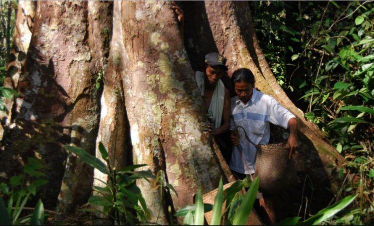 Daerah Penghasil Kayu Jati Terbesar di Indonesia