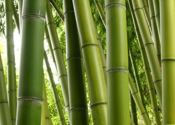 jenis jenis kayu di Indonesia kayu bambu