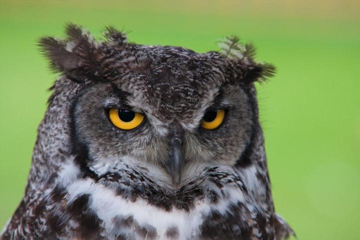 gambar burung hantu owl sistem ekskresi