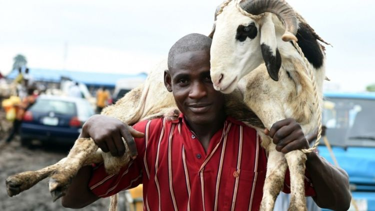 gambar menggendong hewan kambing qurban