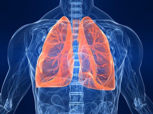 sistem ekskresi parau paru