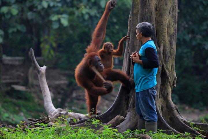 tempat wisata solo kebun binatang Taru Jurug