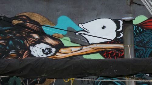 Close up of two more of the birds, one with a pirate eye patch