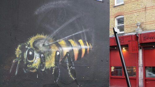Louis Masai Bee on Saltoun Road