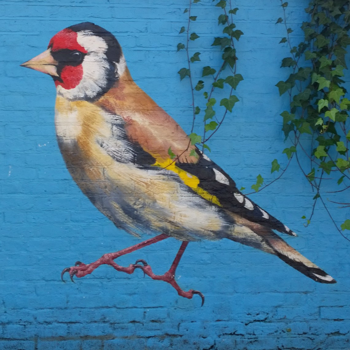 Acton Goldfinch