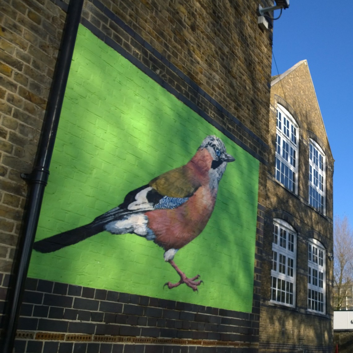 Painting of a Jay by ATM in the grounds of Berrymede school