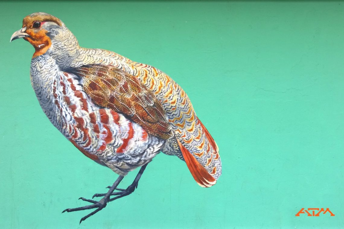 Painting of a grey partridge in Action by ATM