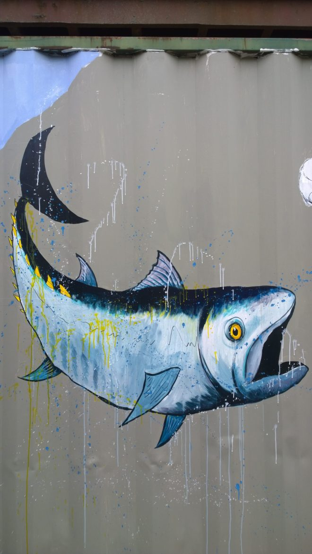 Atlantic Blue Fin tuna by Mutiny
