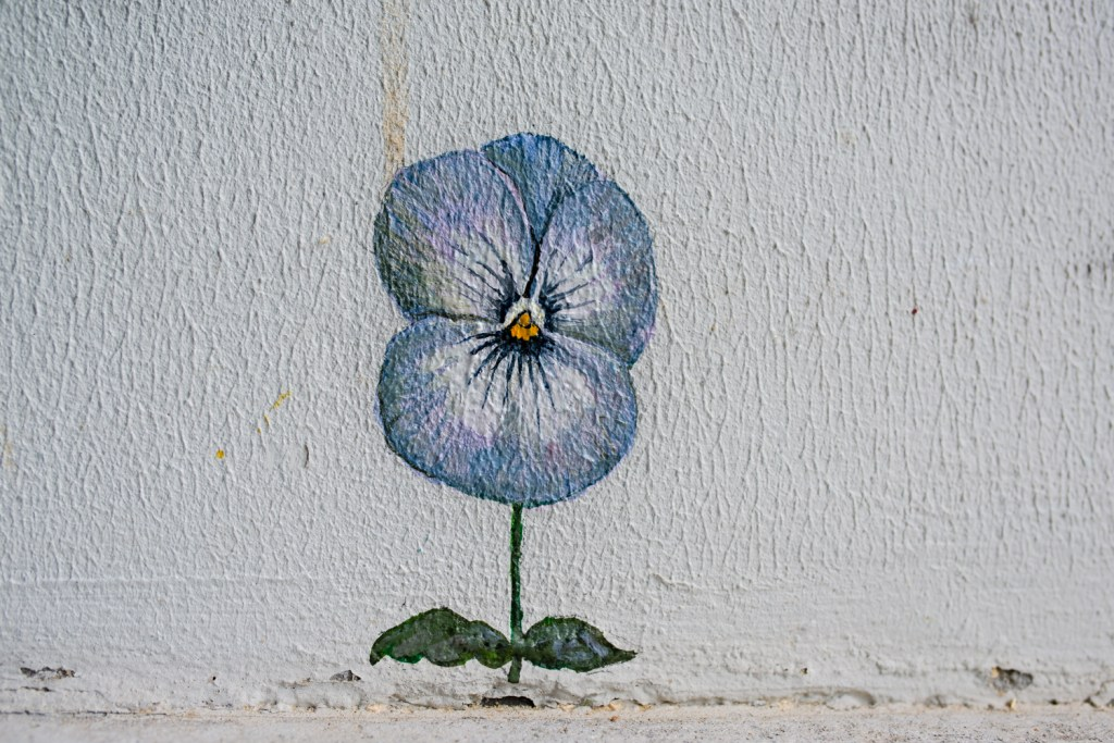 A pansy created as part of the Pansy Project in Stavanger by Paul Harfleet