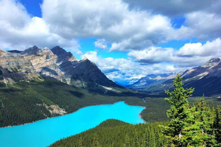 Peyto Lake is a glacier-fed lake in Banff National Park in the Canadian Rockies. During the summer, rock particles flow into the lake from a nearby glacier. The lightweight rock particles float suspended in the water for a long time, giving the lake its spectacular turquoise color.