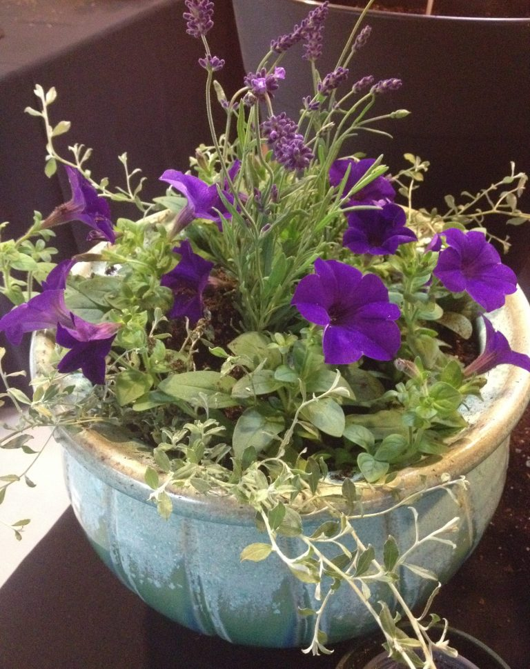 wave petunias in balcony baskets