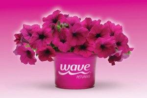 Inspiring Kitchen Wave Petunias