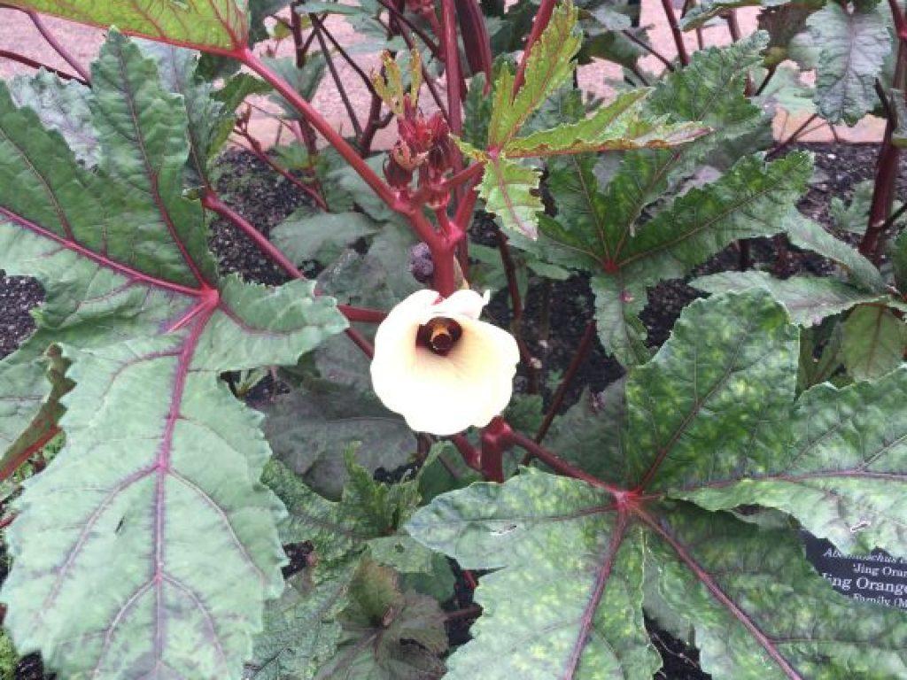 Visit Brazil in the Garden at Chicago Botanical Garden