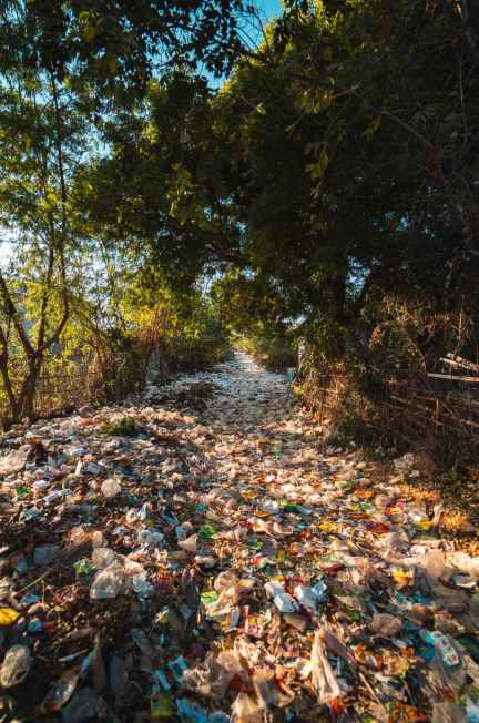 photo of plastics near trees
