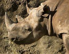 220px black rhino dLHWX 32853