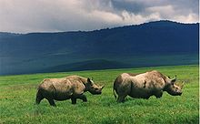 220px black rhinos in crater QFMmG 32853