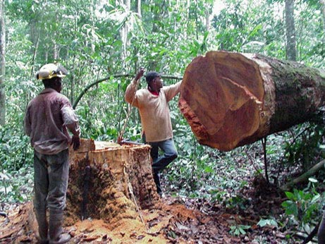africa logging big t6sqx 4515