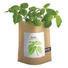basil tulsi plant benefits JBPmM 19618